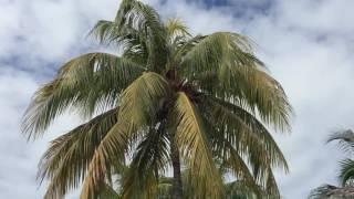 Наш отдых на Кубе - Hotel Iberostar Mojito, Cayo Coco, Cuba - 15.04.-29.04.2016(, 2016-05-22T01:55:03.000Z)
