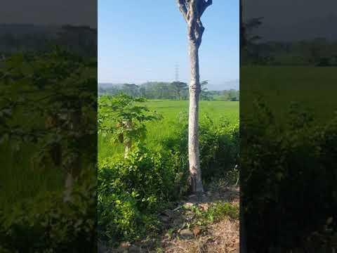 pemandangan hijau alam youtube