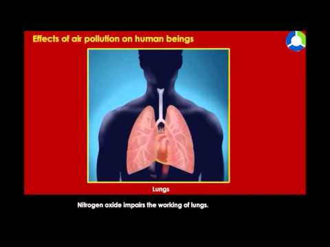 Effects of air Pollution  on Human Beings