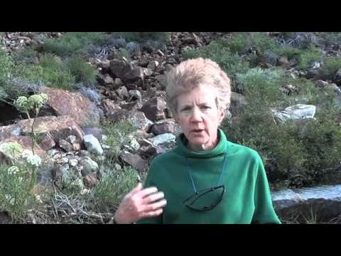 Science Perspectives - Climate Change and the American Pika