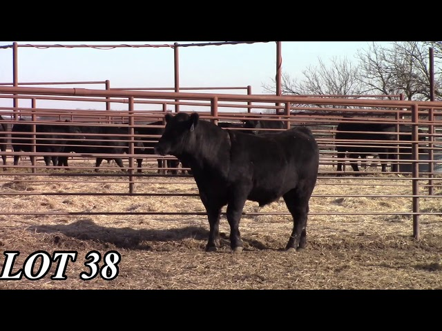 Mead Angus Farms Lot 38