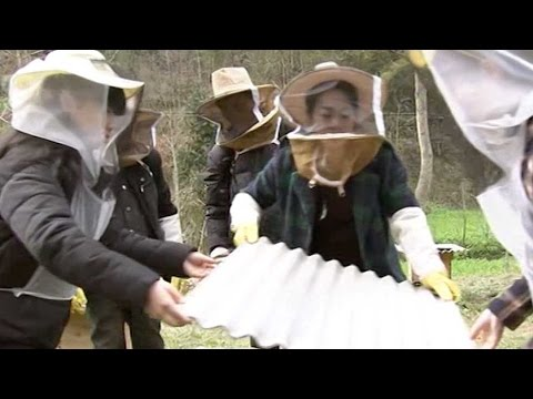 Chinese E-commerce start-up founds beekeeping cooperative