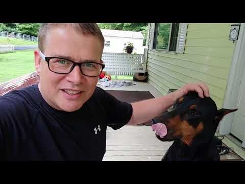 Doberman Pinscher Dog at Home Alone While at Work?
