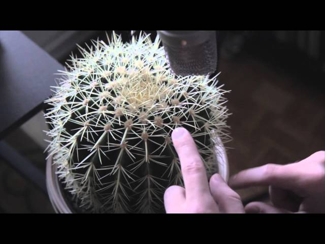 Gourski – Cactus Trap