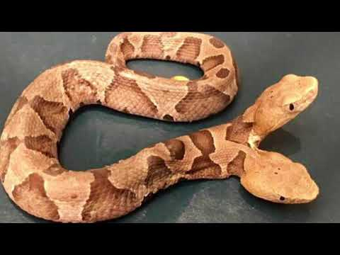 5 Հետաքրքիր փաստ օձերի մասին