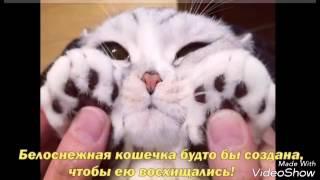 """Японская кошка Хана с """" нарисованной"""" внешностью"""