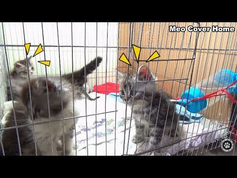 My Kittens Want Out In The Cage | Kittens Meowing 2018 | Meo Cover Home