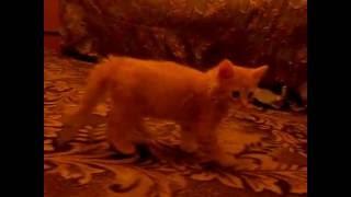 Котенок нападает