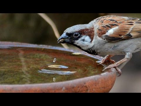how-to-make-a-bird's-water-feeder-with-no-cost-|-#savebirds-|-inspired-by-a-true-incident