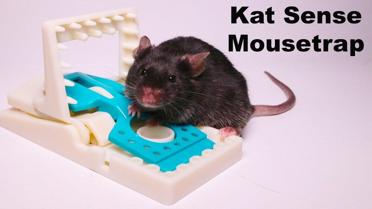 the-kat-sense-mousetrap-is-a-great-trap-full-review-mousetrap-monday