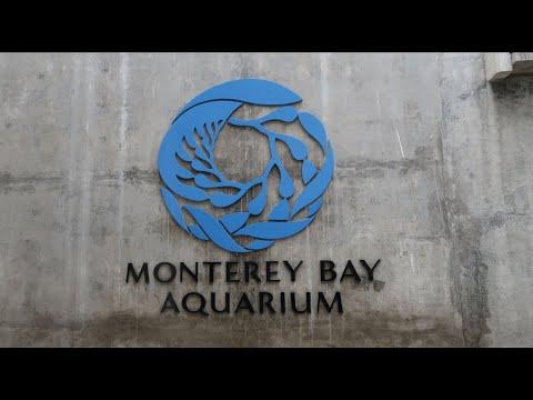 monterey-bay-aquarium-in-monterey,-california-on-cannery-row
