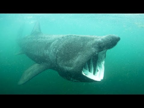 How do you save a shark you know nothing about? | Simon Berrow
