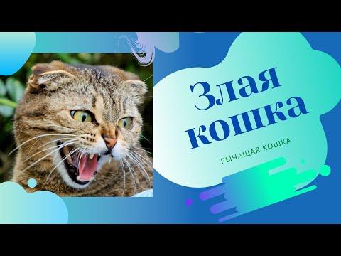 Вопрос: Почему кошка нервничает и шипит на пустоту?