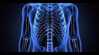 Biokimia Kebidanan : Struktur dan Fungsi Sel.