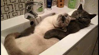 😺 Цензура и коты 🐈 Подборка смешного видео с котами для хорошего настроения 😺