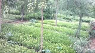 Oye Nursery [Kitchen garden, Medicinal plants, Etc]