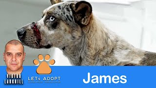 Hope For Paws Rescue James with Cuts on Face