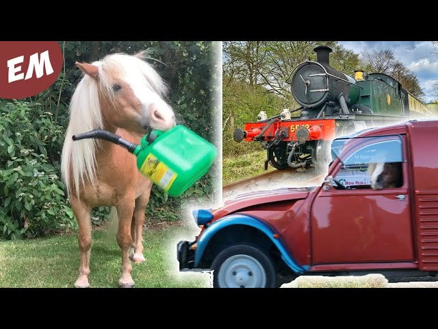 Manes, Trains and Automobiles - (Cute & Funny Ponies Compilation)