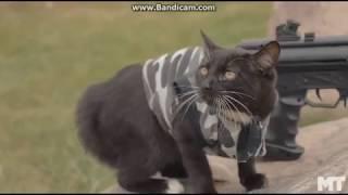 Война котов Z!