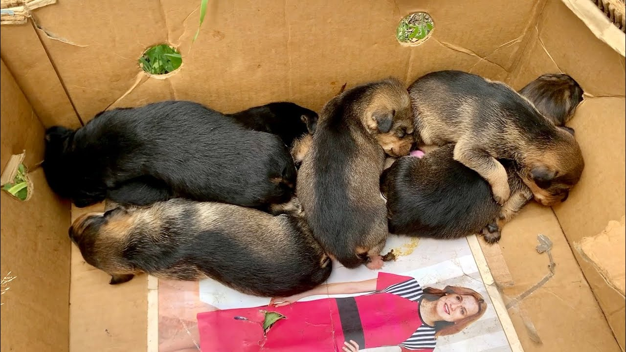 Six baby puppies abandoned to die in a cardboard box | Dog Rescue Shelter, Serbia