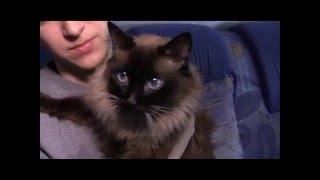 В Рубежном кот-долгожитель отпраздновал 20-й день рождения