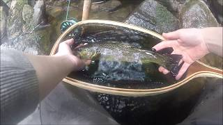 Wild brown trout | Fly fishing | Little beautiful stream
