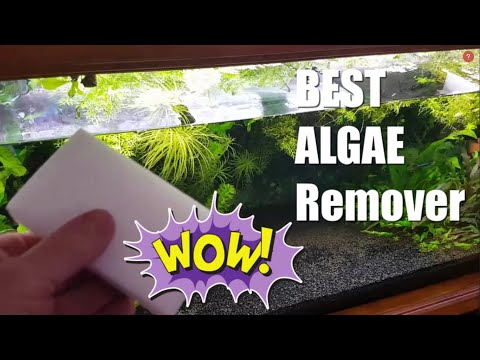 My NEW FAVOURITE Algae Cleaner | For Aquarium Glass