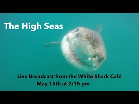 The High Seas — Live Broadcast from the White Shark Café