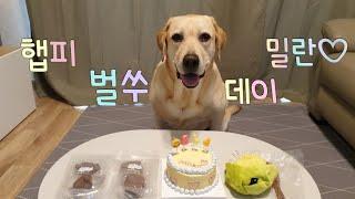 밀란이생일1부/육아스트레스를 강아지 케이크 만들기로 날…