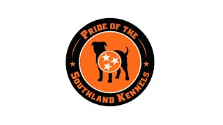 EXCLUSIVE INTERVIEW  DANIEL TAYLOR  PRIDE OF THE SOUTHLAND KENNELS  AMERICAN BULLDOGS