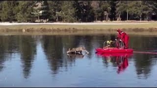 В США спасатель помог оленю выбраться из скользкого плена