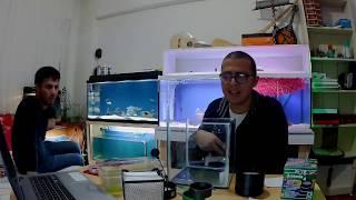Artemia Üretimi Video 3 Büyüme ve Gerekli Şartlar Nelerdir.