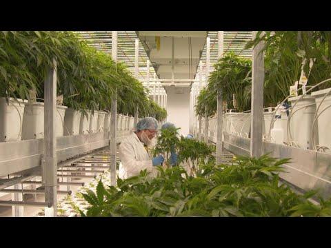 Massachusetts city welcomes marijuana industry with open arms