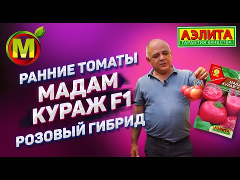 РАННИЕ ТОМАТЫ для 2020 года - Розовый Гибрид Мадам Кураж F1