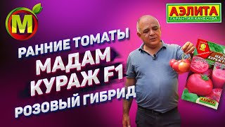 РАННИЕ ТОМАТЫ для 2020 года Розовый Гибрид Мадам Кураж F1