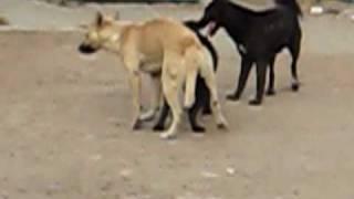 CORRALEJO HIDALGO (amores perros)