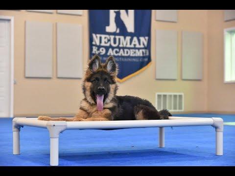 Max (German Shepherd Dog) Puppy Camp Dog Training Video Demonstration