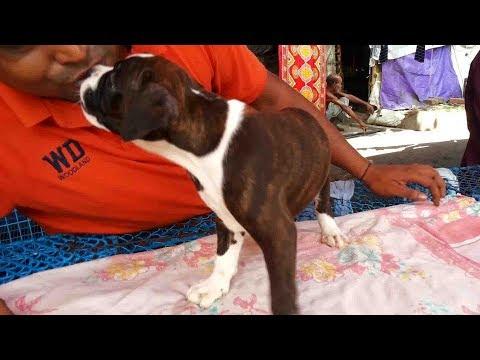 CUTE DOG PUPPY AT GALIFF STREET KOLKATA PET MARKET  || JULY 2017 VISIT