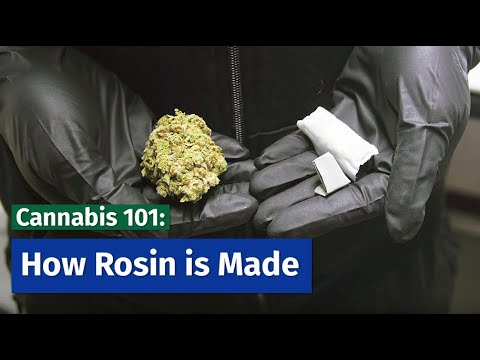 Cannabis 101: How Rosin is Made
