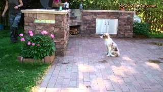 Puppy Training In Charlotte Nc - Border Collie Training