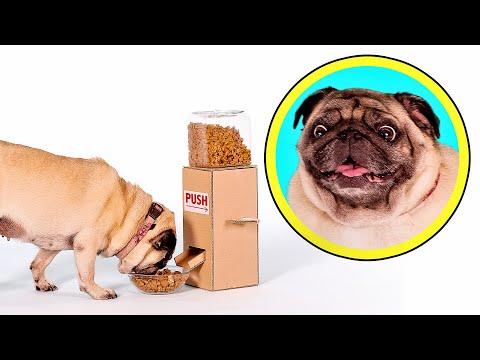 Порадуйте свою собаку   Сделайте ей автоматическую кормушку