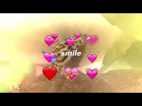 Precious Nova -Meme- (Happy Valentine's Day)