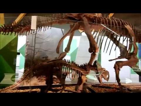 Philip J  Currie Dinosaur Museum part 1 2015 09 11