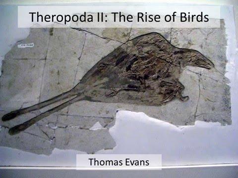 Theropoda II