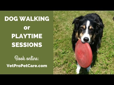 PLAYTIME SESSION | VetPro Pet Care: Dog Walking and Dog Hiking services for Dover, NH