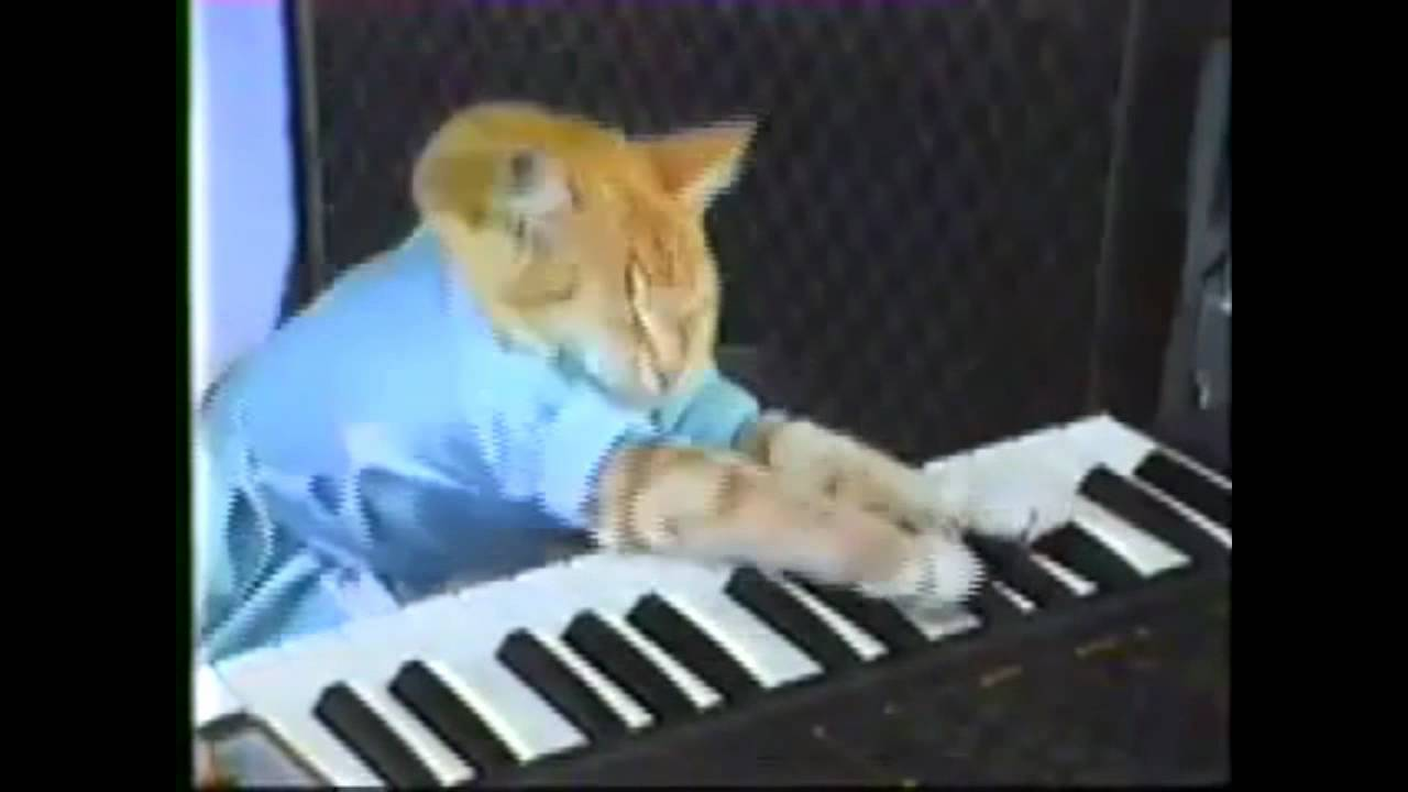 Youtube Cat Memes