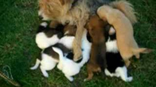 impressive dog breast-feeding
