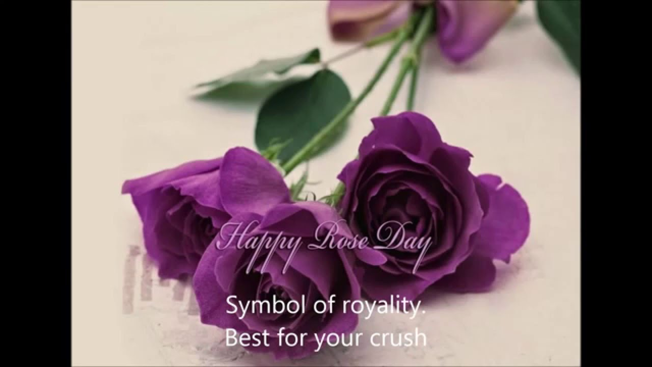 Rose Day Rose Flower Meaningshistory And Significance Of Rose