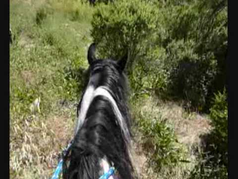 Riding Sugar Pie the Wonder Horse past the Lotus Pond