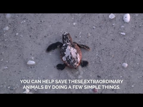 What To Know About Sea Turtle Nesting Season